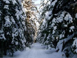 Зимой был сказочный лес