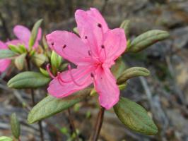 Необычного цвета цветочек