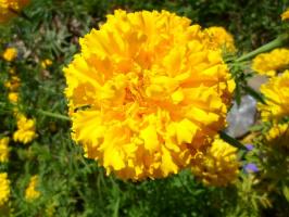 Жёлтые краски