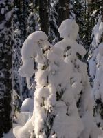 Зимой были жители снежного леса
