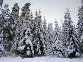 Сибирь .Зима.