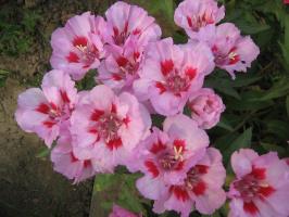 цветы2010г. 055