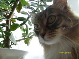 мой кот Гоша