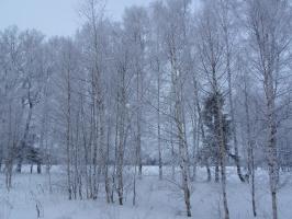 Волшебница - зима.