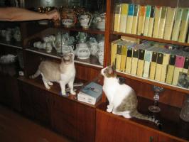 Наши кошки Кучка и Аефиса