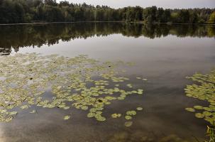 У озера.