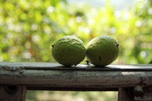 Что это за съедобный плод? Оксаночка,не выдавай сразу!!!!