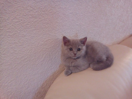 котёнок Соня