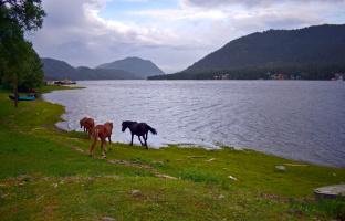 На берегу Телецкого озера