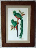 Зелёные попугаи