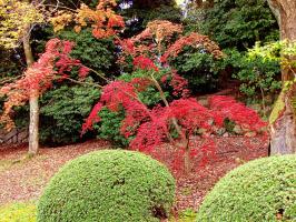 """""""Там за окнами чудо-палитра, Желто-красные краски горят. Осень фокус проделала хитрый, На деревья набросив наряд..."""" (2 снимка)"""