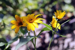 Что так красиво цветет в августе-сентябре?