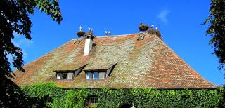 Аисты на крыше