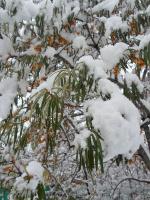 И первые седой зимы  угрозы...
