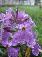 Утро после дождя..