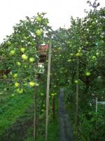 Яблочный коридор. Сентябрь 2015.