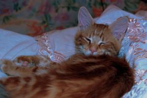 Сонный Баська.