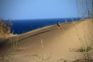 Странник пустыни.