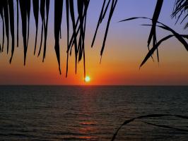 Зацепилось солнце за ресничку пальмы...