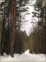 Лесные тропинки. Апрель...