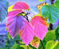 Осенний  гербарий