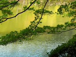 Ветви, тянущиеся к реке...