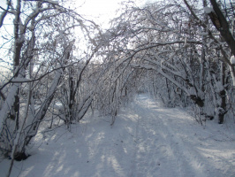 Снег, который радует глаз