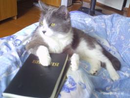 Набожный кот Константин