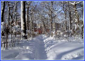 В зимнем парке