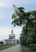В любимом городе цветут каштаны ... ))