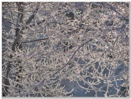 Кружева  зимы