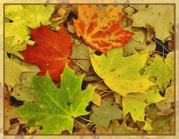 Листья. Краски осени.