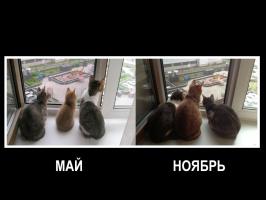 За время пути Котейка успел подрасти:))))