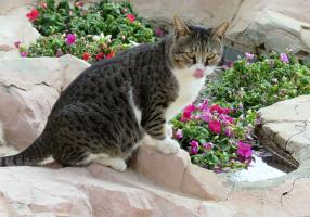 Особенность кошачьей походки и как это позволяет ей быть более скрытной
