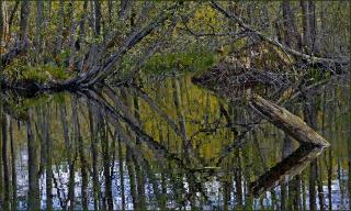 На Шатурских болотах...