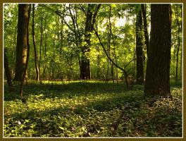 одним солнечным днём в лесу...