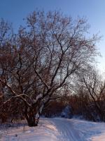 за поворотом зимы