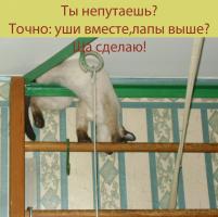 Симосик