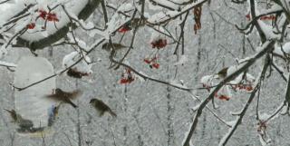 Птичья столовая. Зимой особенно поесть хочется!