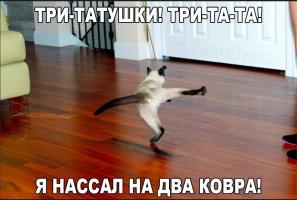 Кот жгет