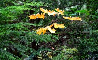 Признаки осени в хвойном лесу (+ 4 снимка)