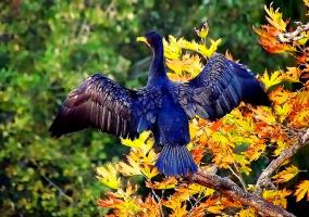 На крыльях осени