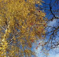 Осень подружила!