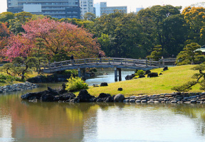 Пейзаж токийского парка