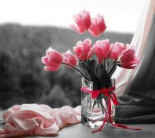 Тюльпан! - даёт салют весне!