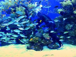 Смотритель подводного кораллового царства