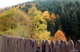Осенний заборчик
