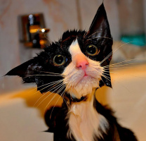 я помылся