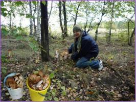Урожайное лето на грибы