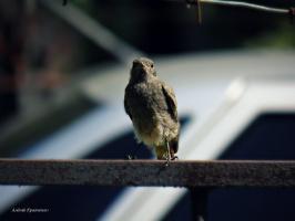 Весенняя птичка.